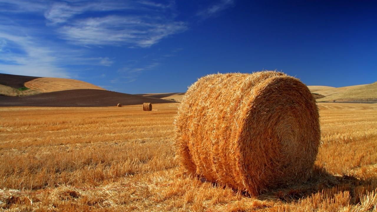 ESTE Terreno agricolo di 14.000 mq.