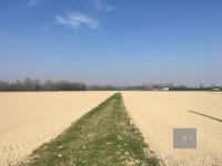 Curtarolo (PD) vendesi 8 ettari di terreno agricolo.