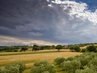 Azienda agricola olivicoltura biologica