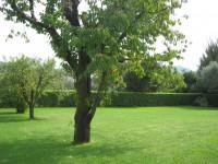 Villa in affitto a Abano Terme