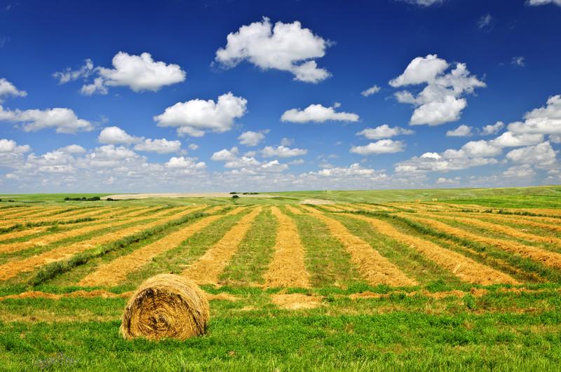 MONSELICE (Località San Bortolo) Terreno agricolo di sei campi padovani.