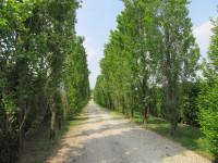 Terreno edificabile e agricolo