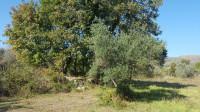 Terreno agricolo Alvito