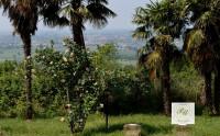 Vendesi casa singola a Baone
