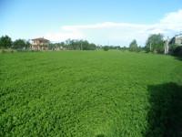 terreno edificabile resideziale con possibilità di area agricola di 3500 mq