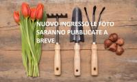 TORRI DI QUARTESOLO TERRENO EDIFICABILE