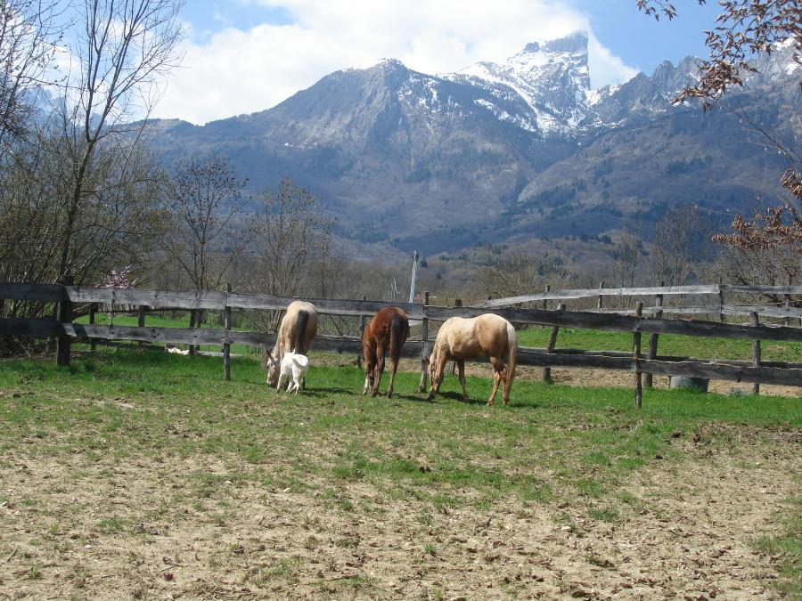 Bauernhof zum Kauf in Belluno