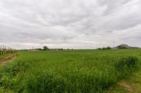 Terreno agricolo a Monselice rif 1075