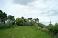 Delizioso agriturismo con 47 ha di terreno, palaia pisa