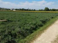 Terreno in vendita a Ponso
