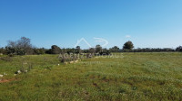 Puglia,Lecce,Salento,Marina di Alliste,rustico di campagna su terreno di 12.736mq