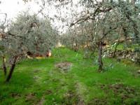 Terreno in vendita a Bucine