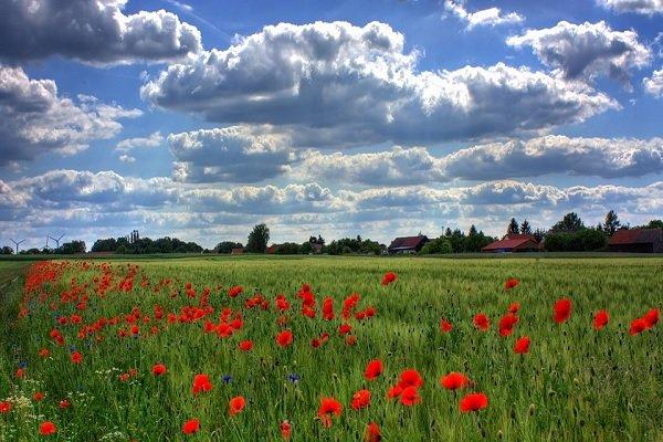 Rezzato, zona Santuario vendesi terreno agricolo, piano, irrigabile, facile accesso..