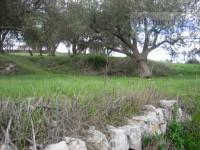 Terreno c.da Palmento