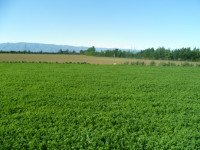vendesi terreno edificabile in ottima posizione