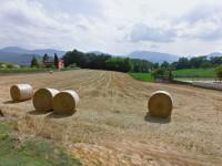 Terreno agricolo di 36.410 mq