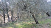 Toscana montopoli posizione di crinale. cantina vinicola con appartamenti