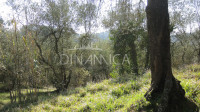 Toscana montopoli posizione di crinale. recupero volumetrico